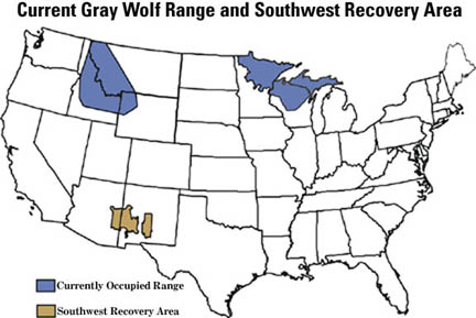 Wolf Where To See Wildlife